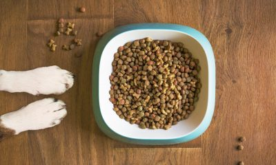 Paws next to a bowl of dog food